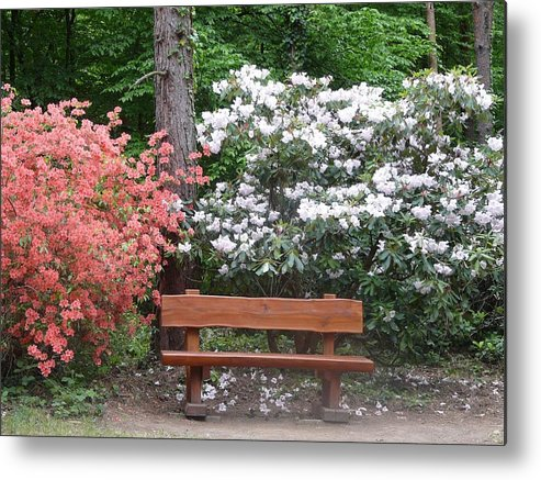 Spring Metal Print featuring the photograph The Bench Of Peace And Pleasure by Attila Balazs