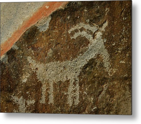 Big Horn Sheep Metal Print featuring the photograph The Big Horn by Joan McDaniel