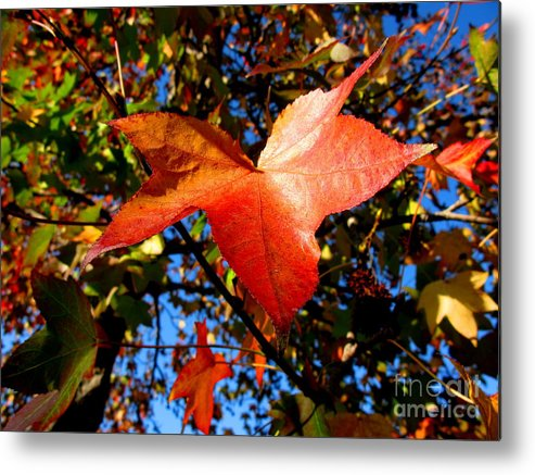 Fall Metal Print featuring the photograph The Flavor Of Fall by PJ Cloud