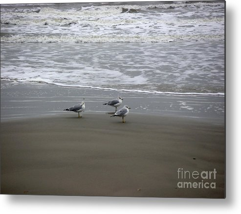 Nature Metal Print featuring the photograph The Gulf In Shades Of Gray - Formation by Lucyna A M Green