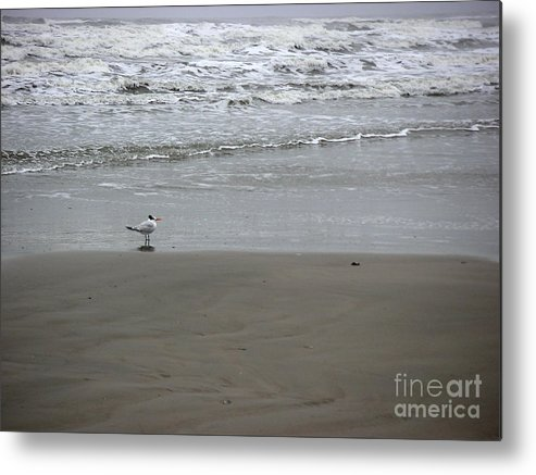 Nature Metal Print featuring the photograph The Gulf In Shades Of Gray - Seaing by Lucyna A M Green