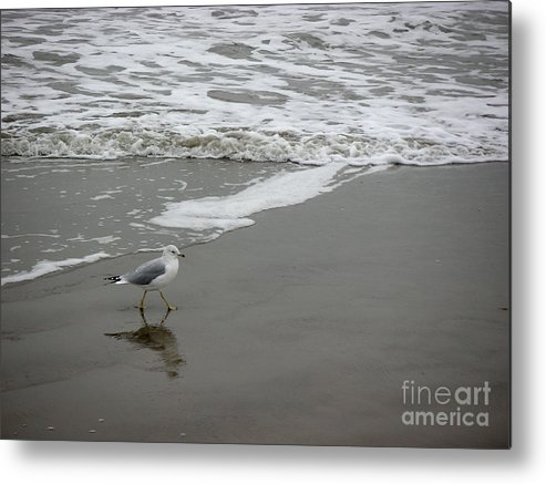 Nature Metal Print featuring the photograph The Gulf In Shades Of Gray - Strutting by Lucyna A M Green