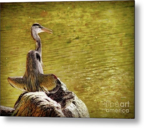 Bird Metal Print featuring the photograph The Hunter by Sue Melvin
