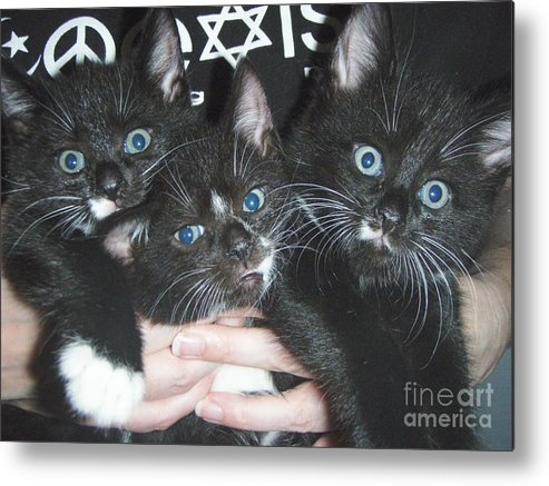 Kittens Metal Print featuring the photograph The Kittidiots by Kristine Nora