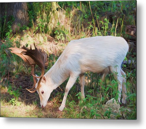Cervidae Metal Print featuring the photograph The Magical Deer by Roy Pedersen