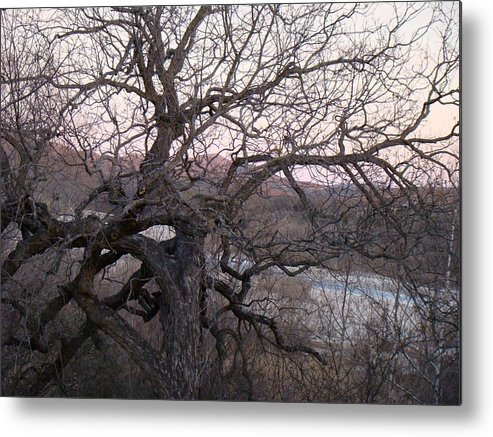 Pecan Tree Metal Print featuring the photograph The Mother Tree One by Ana Villaronga