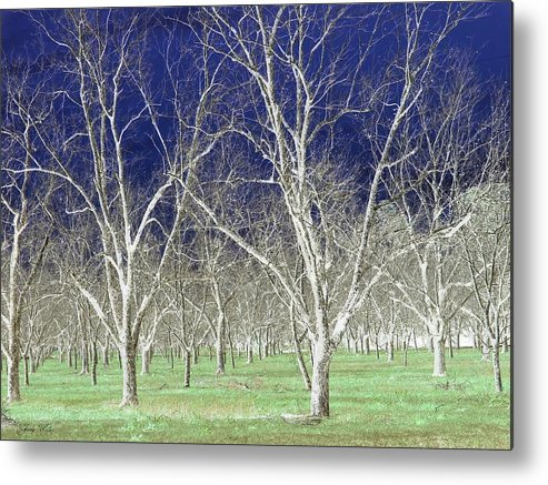 Pecan Metal Print featuring the photograph The Pecan Grove by Judy Waller
