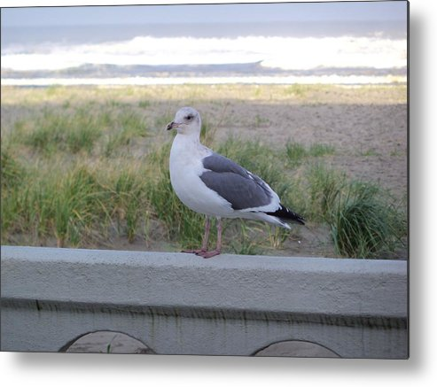 Seagull Metal Print featuring the photograph The Soldier by Julie Bell