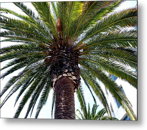 Palm Metal Print featuring the photograph The Top by Dmytro Toptygin