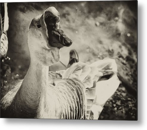 Philadelphia Metal Print featuring the photograph The Ugly Duckling by Bill Cannon