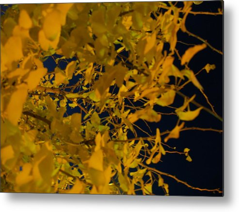 Leaves Metal Print featuring the photograph They Were All There by Jacob Stempky