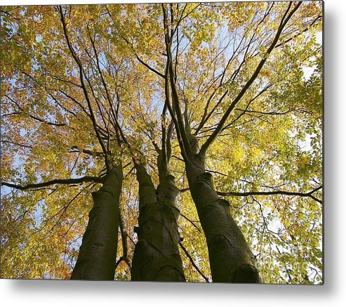 Trees Metal Print featuring the photograph Three Friends by Piotr Loza