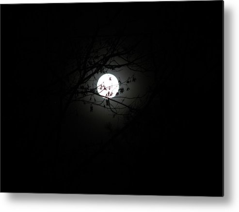 Supermoon Metal Print featuring the photograph Through The Trees by Will Haley