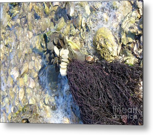 Ocean Metal Print featuring the photograph Tide Pool by Stephanie Richards