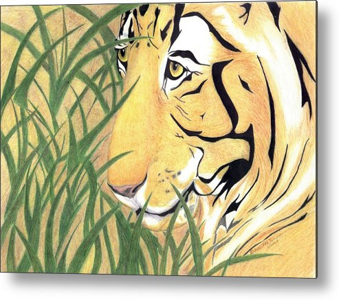 Tiger Metal Print featuring the drawing Tiger Traveler - Www.jennifer-d-art.com by Jennifer Skalecke