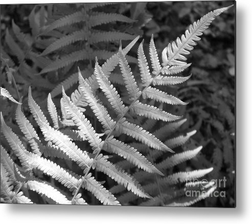 Black And White Metal Print featuring the photograph Tilted Fern by Stephanie Richards