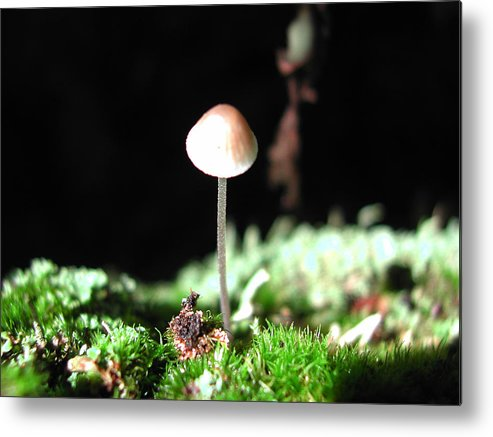 Nature Metal Print featuring the photograph Tiny Mushroom 2 by Steven Scanlon