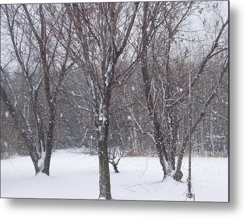 Snow Metal Print featuring the photograph Today - November 25 - Photograph by Jackie Mueller-Jones