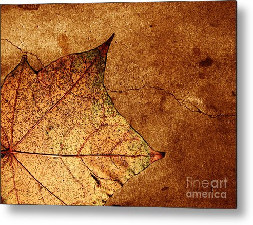 Autumn Metal Print featuring the photograph Today Everything Changes by Dana DiPasquale