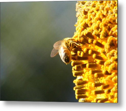 Bee Metal Print featuring the photograph Too Bee Or Not To Be by Gail Salitui
