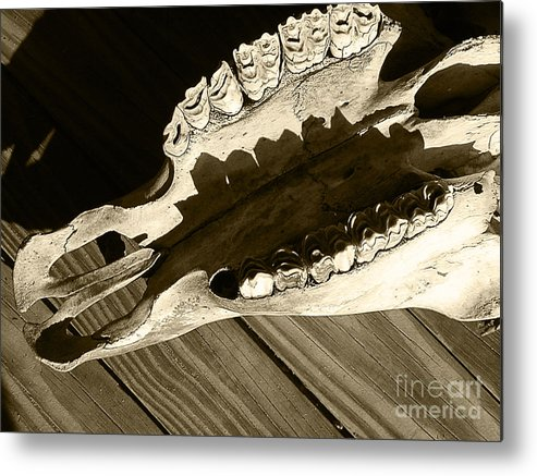 Cow Metal Print featuring the photograph Tooth Decay by Laura Brightwood