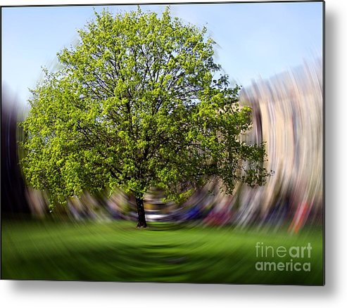 Tree Metal Print featuring the photograph Tree With Animated Surroundings by Sascha Meyer