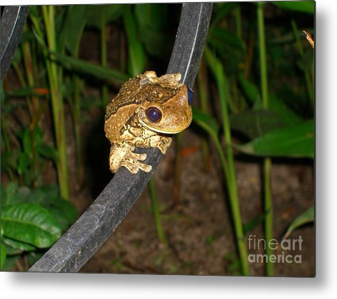 Tree Metal Print featuring the photograph Treefrog by Jim Thomson