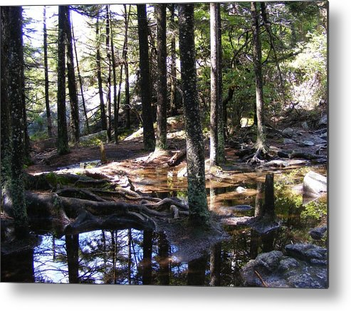 Tree Metal Print featuring the photograph Trees In Water by Alison Heckard