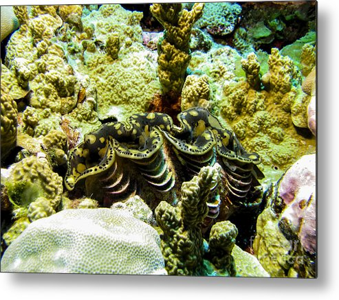 Coral Metal Print featuring the photograph Tridacna3 by Dan Norton
