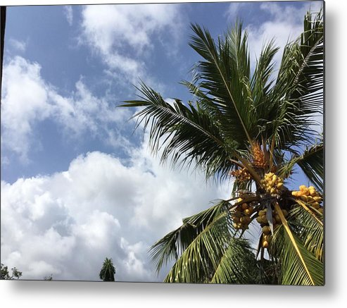 Tropical Metal Print featuring the photograph Tropical Treat by Okitha Dharmapriya