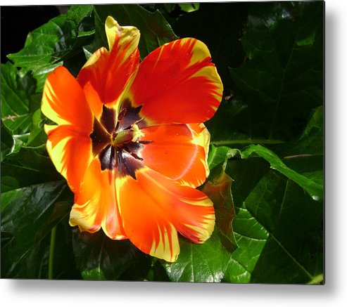 Tulip Metal Print featuring the digital art Tulip After The Rains by Laura Johnson