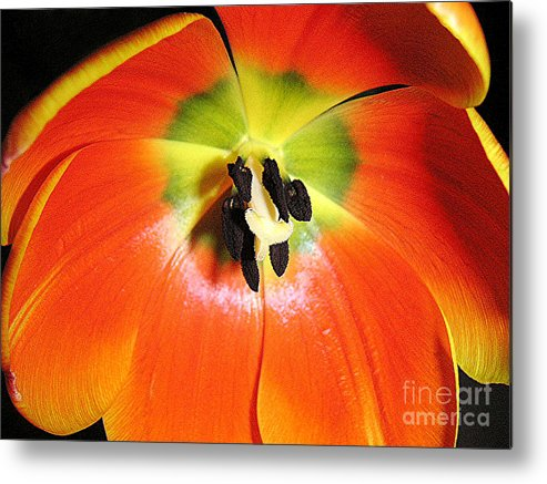 Nature Metal Print featuring the photograph Tulips - An Inside Look by Lucyna A M Green