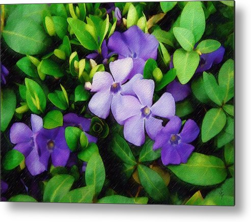 Vinca Metal Print featuring the photograph Vinca by Sandy MacGowan