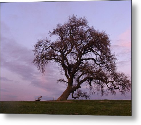 Livermore Metal Print featuring the photograph Waiting For Paul by Karen W Meyer