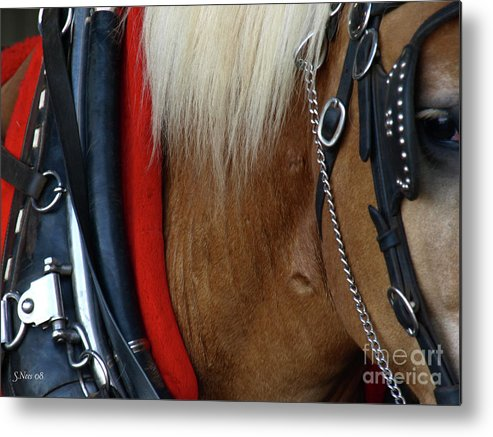 Draft Horse Metal Print featuring the photograph Waiting by Shari Nees
