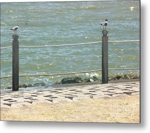 Birds Metal Print featuring the photograph Waiting To Fish by Damion Powell