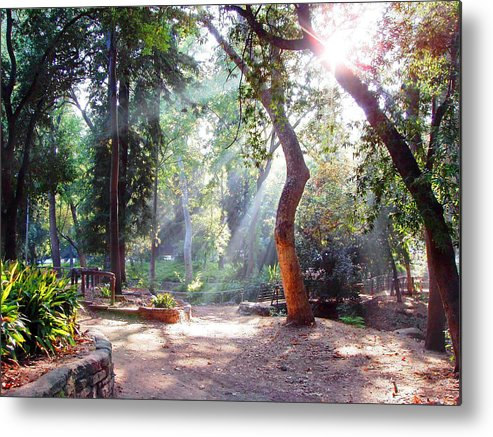 Spiritual Metal Print featuring the photograph Walk In The Park by Randy Sprout