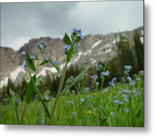 Purple Flower Metal Print featuring the photograph Wasatch Luster by Derek Nielsen
