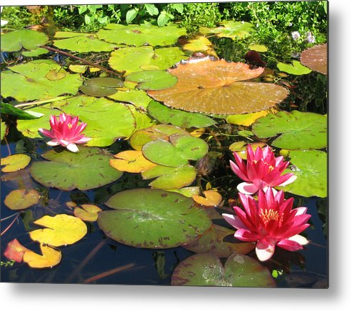 Travel Metal Print featuring the photograph Water Lilies At San Juan Capistrano by Beverlee Singer