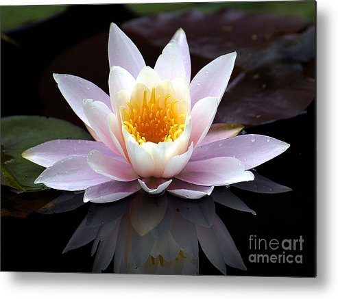 Waterlily Metal Print featuring the photograph Water Lily With Reflection by Neil Doren