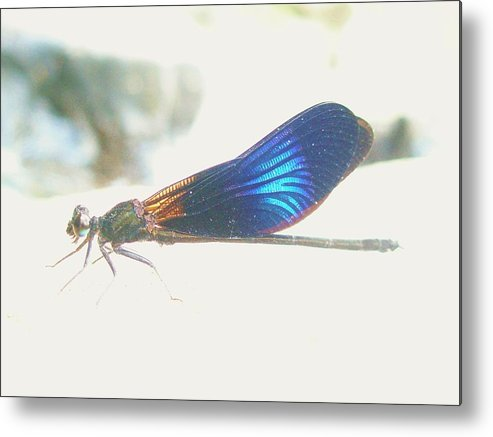 Dragonfly Metal Print featuring the photograph Waterfall Dragonfly by Gemma Fox