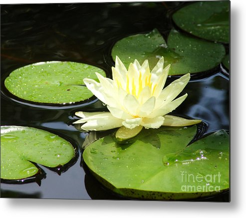 Waterlily Metal Print featuring the photograph Waterlily In Yellow by Tonya Laker