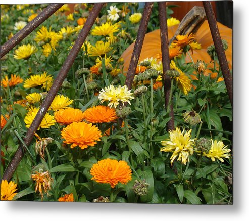 Fall Metal Print featuring the photograph Wheeling To Autumn by Tingy Wende