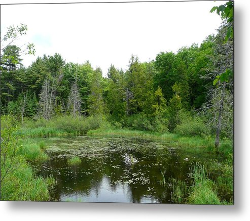 Landscape Metal Print featuring the photograph Where The Green Things Live by Dmytro Toptygin