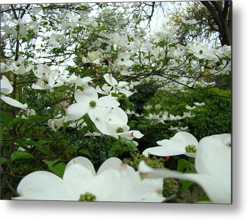 Dogwood Metal Print featuring the photograph White Dogwood Flowers 6 Dogwood Tree Flowers Art Prints Baslee Troutman by Baslee Troutman