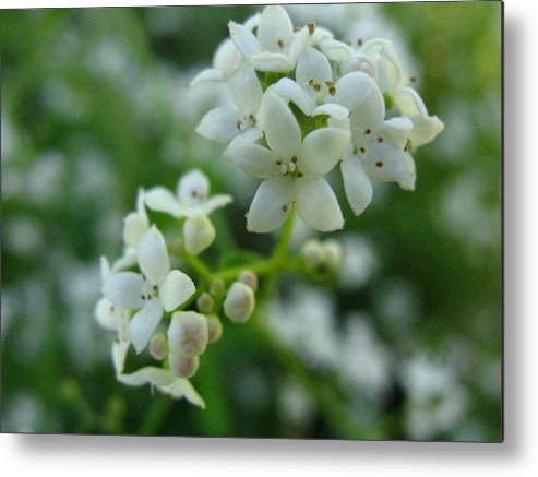 Flower Metal Print featuring the photograph White Floral Cluster by Melissa Parks