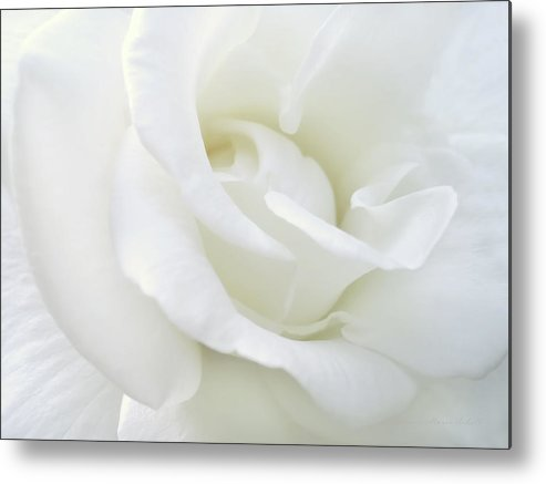 Rose Metal Print featuring the photograph White Rose Angel Wings by Jennie Marie Schell