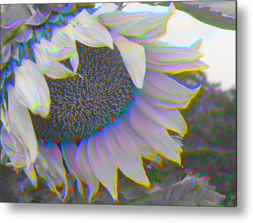 Landscape Metal Print featuring the photograph White Sunflower by Vicky Brago-Mitchell