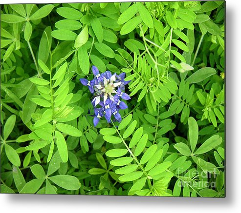 Nature Metal Print featuring the photograph Wildflowers - Protective Detail by Lucyna A M Green