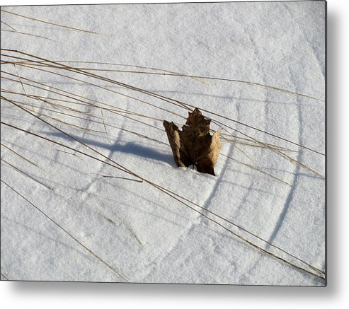 Snow Metal Print featuring the photograph Windswept by Douglas Pike